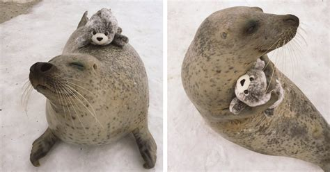 This Earless Seal Hugs a Stuffed Toy That's His Mini-Me
