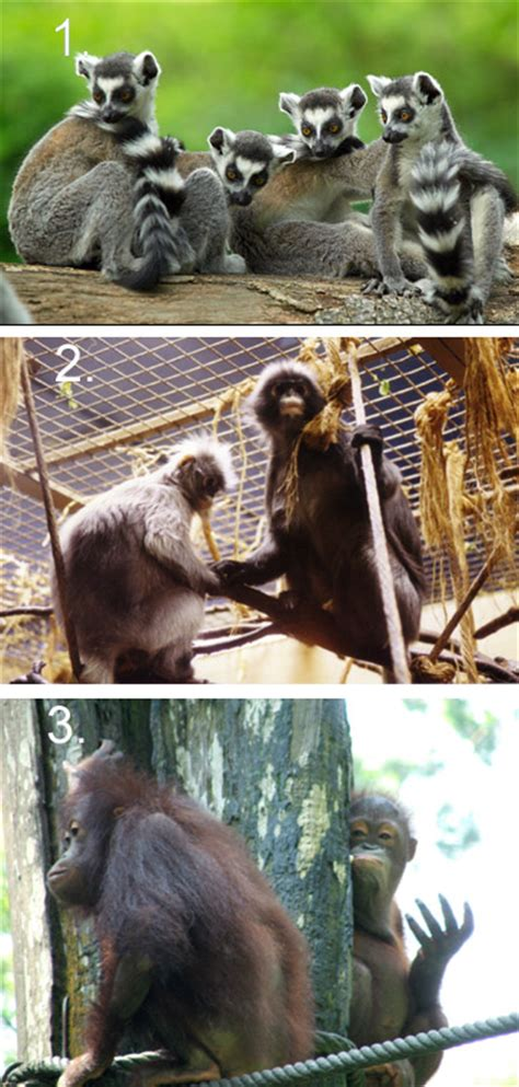 Natural History Collections: ORDER PRIMATES
